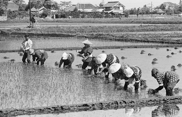 Японские фермеры на рисовых полях, 1966 год