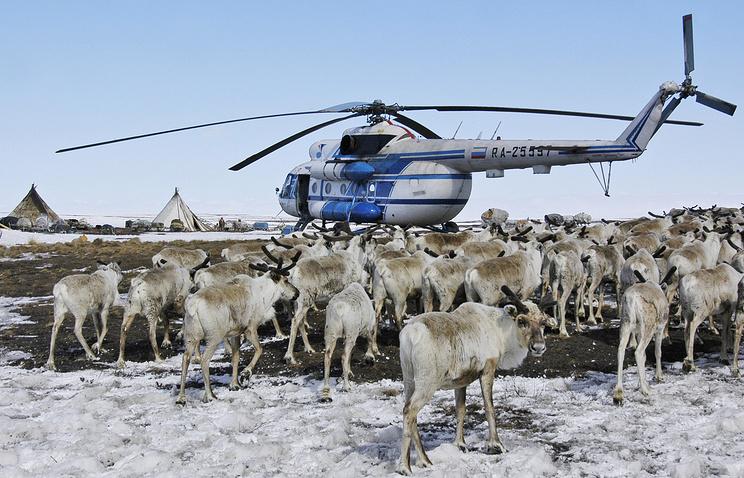Стойбище оленеводов в Байдаратской тундре на полуострове Ямал