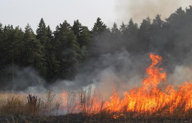 Лесные пожары в Подмосковье 2010 года.