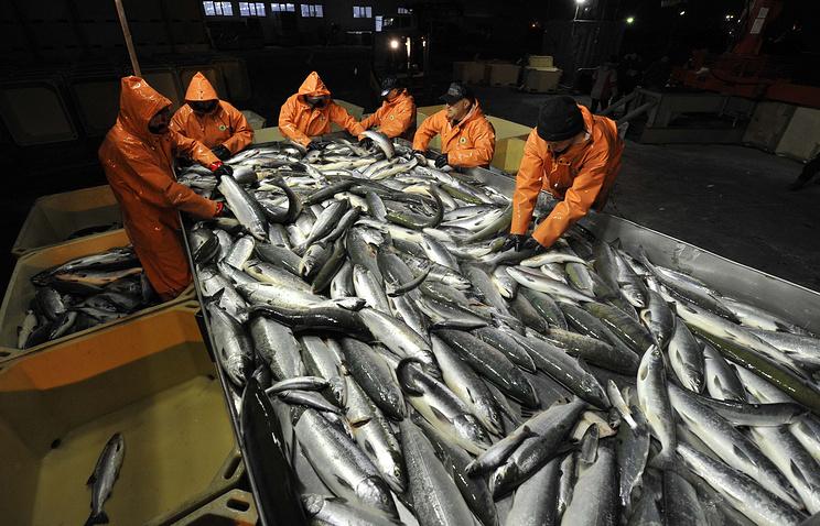Дон лидирует пообъемам производства рыбы вгосударстве