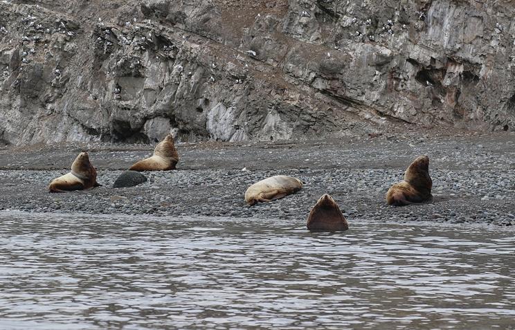 Cотрудники экстренных служб иволонтеры очистили отмусора лежбище морских котиков