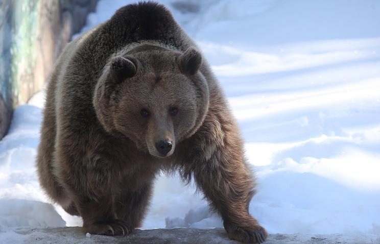 Медведи, сурки иеноты впали вспячку вМосковском зоопарке