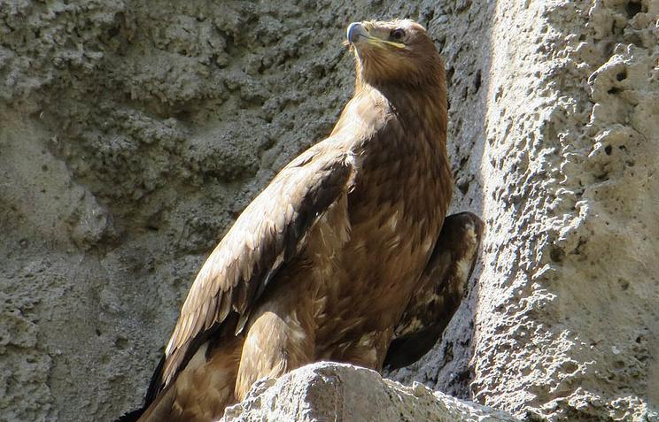 Птенца орла вМосковском зоопарке назвали вчесть Игоря Акинфеева