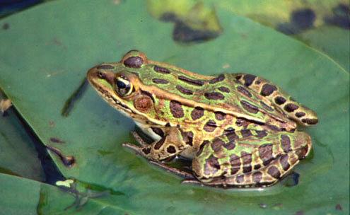 Фото www.www.diggasite.com