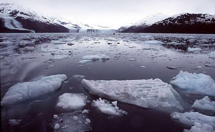 Фото из архива EPA/GREENPEACE/ИТАР-ТАСС