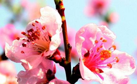 Фото www.desso.com