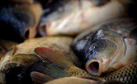 Фото ИТАР-ТАСС/ EPA/ VASSIL DONEV