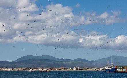 Виды Курильских островов, фото ИТАР-ТАСС/ Владимир Сергеев